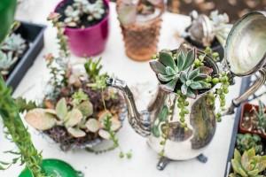 Succulent image by Laura Morsman